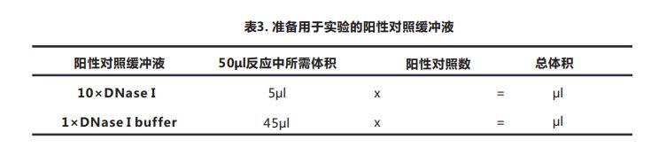 Tunel细胞凋亡检测试剂盒(荧光法-绿光)-4.png