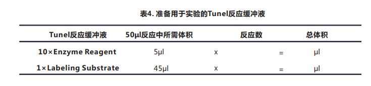 Tunel细胞凋亡检测试剂盒(荧光法-绿光)-5.png