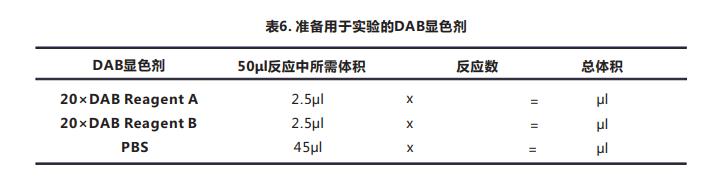 Tunel细胞凋亡检测试剂盒(显色法)029--7.png